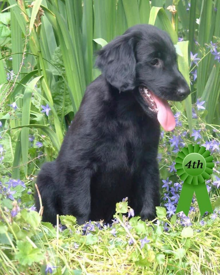 4th Puppy Photo Competition