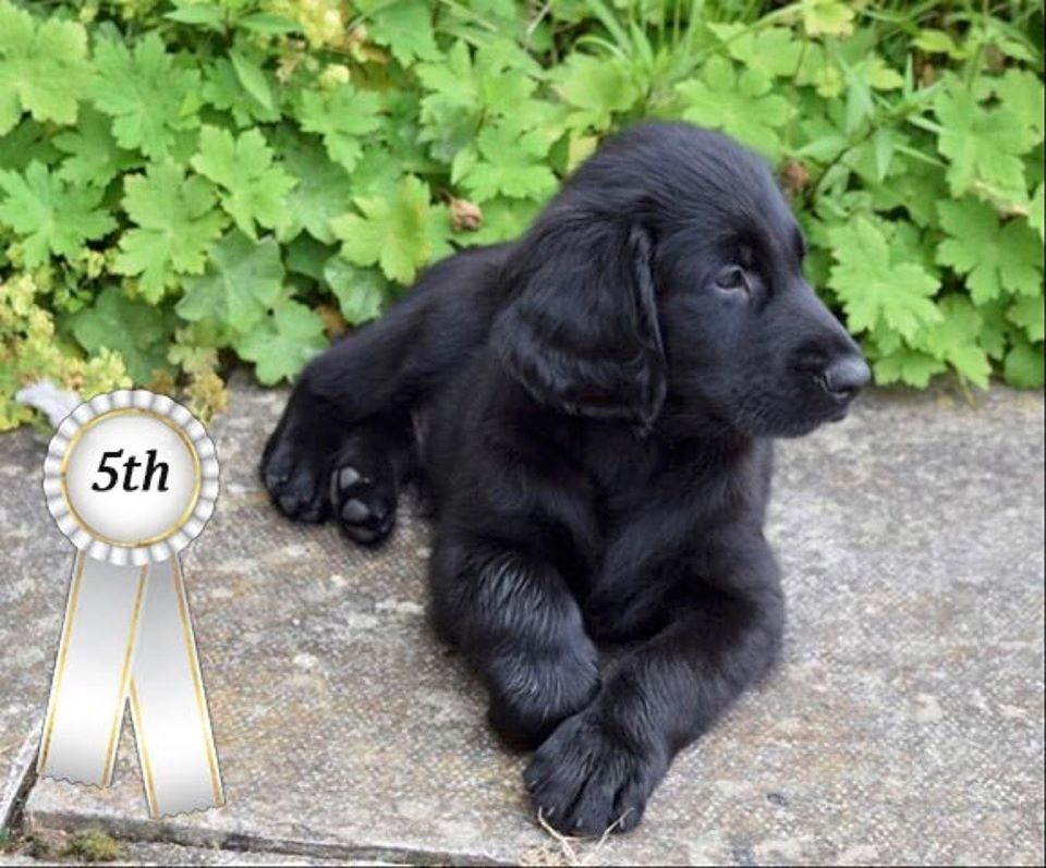 5th Puppy Photo Competition
