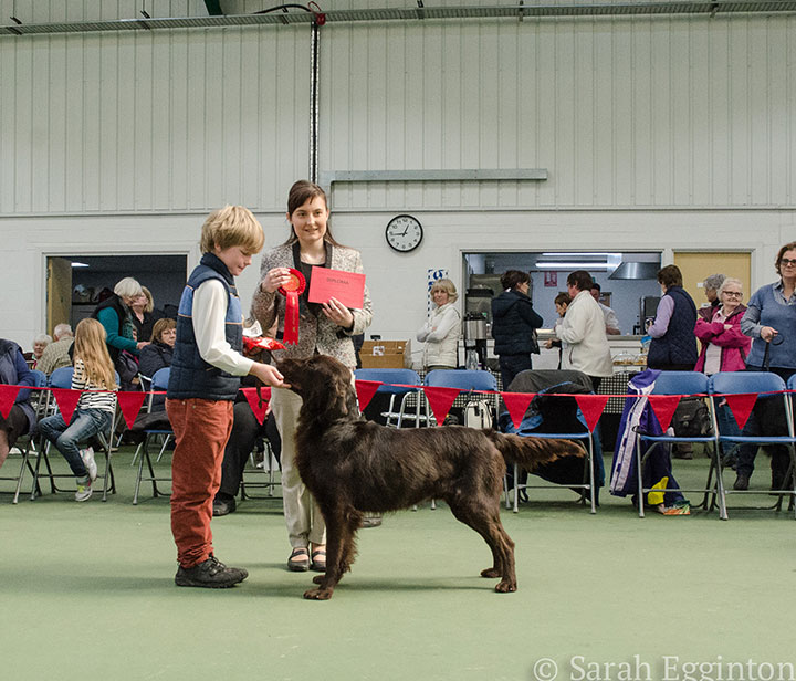 Breed show 11