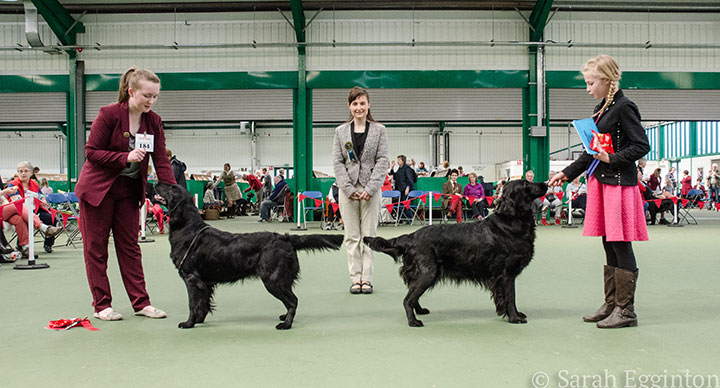 Breed show 12