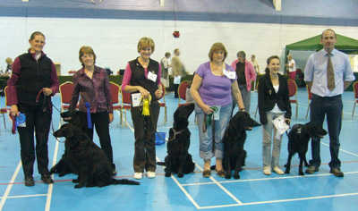 Novice Obedience Winners